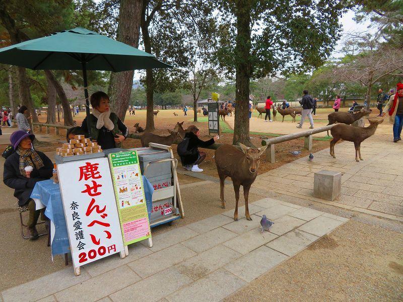 奈良国立博物館と奈良公園20200112_e0237645_15524027.jpg