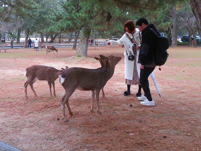 奈良国立博物館と奈良公園20200112_e0237645_15524043.jpg