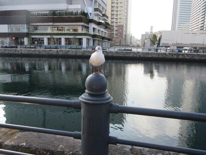 【桜木町駅からアパホテルまでの道のり】てくてくのろり徒歩23分_b0009849_17414100.jpg