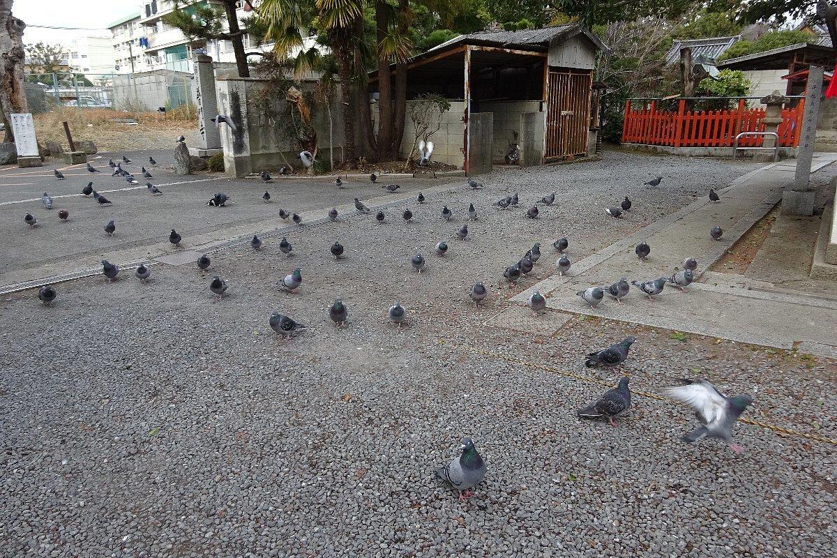 高槻市の三輪神社(その1)_c0112559_08340250.jpg