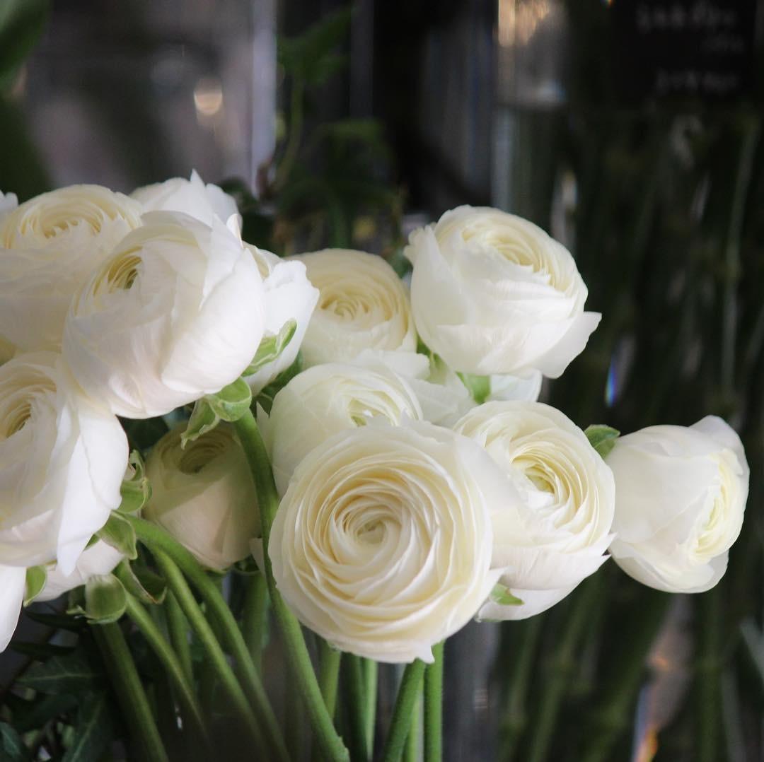 月1出張花屋  in poche_e0146469_13055974.jpeg