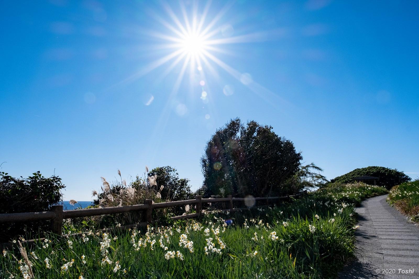 咲かないスイセン_c0350572_22125817.jpg