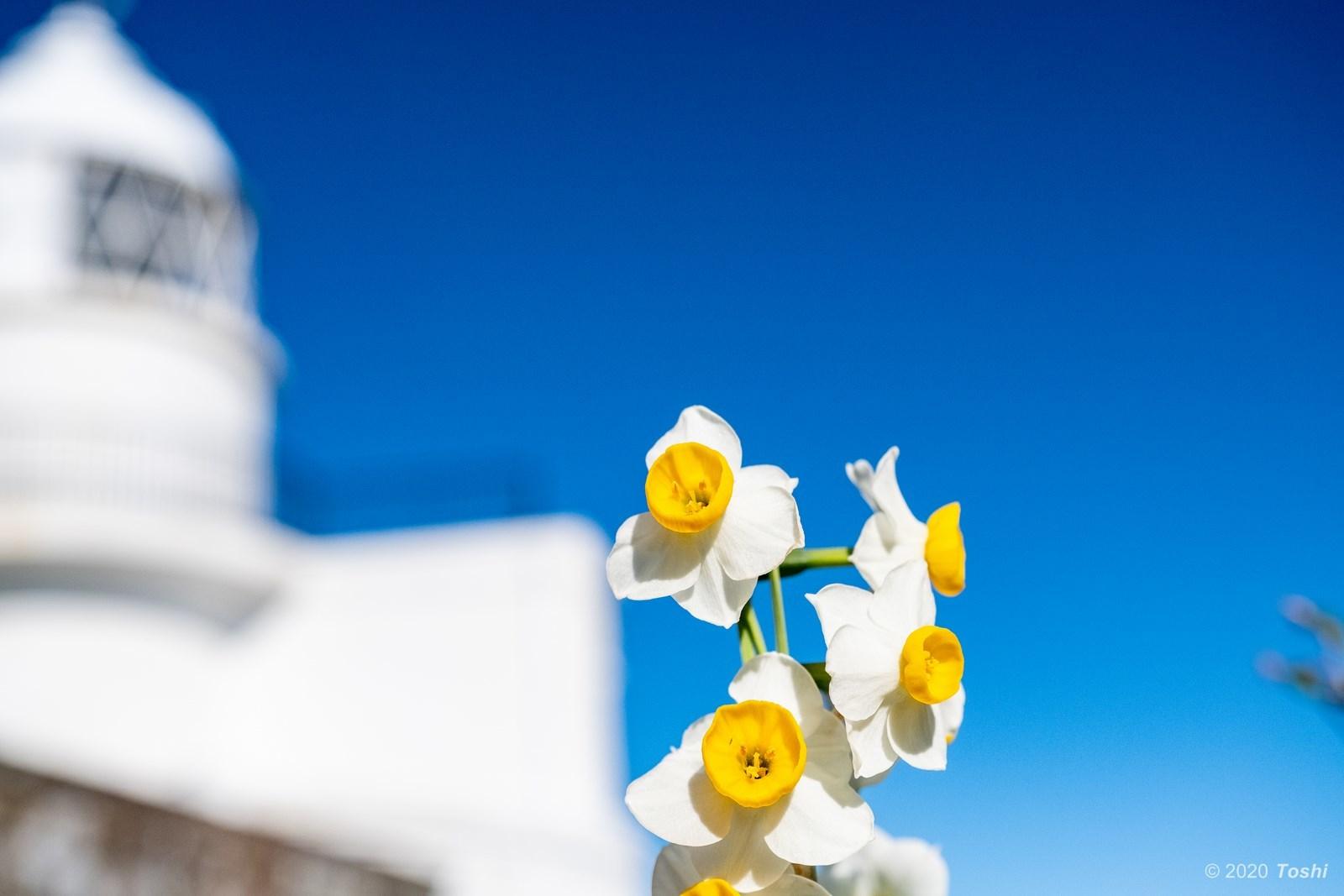 咲かないスイセン_c0350572_22140713.jpg