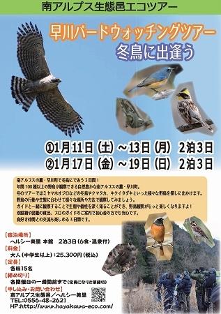 ★クマタカやミヤマホオジロに出逢うツアー_e0046474_10053326.jpg