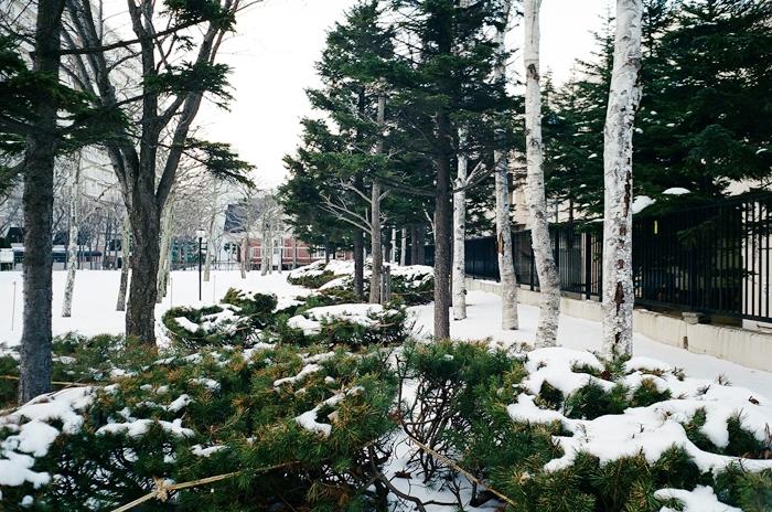例年なら雪の下の草木たち_c0182775_16394556.jpg