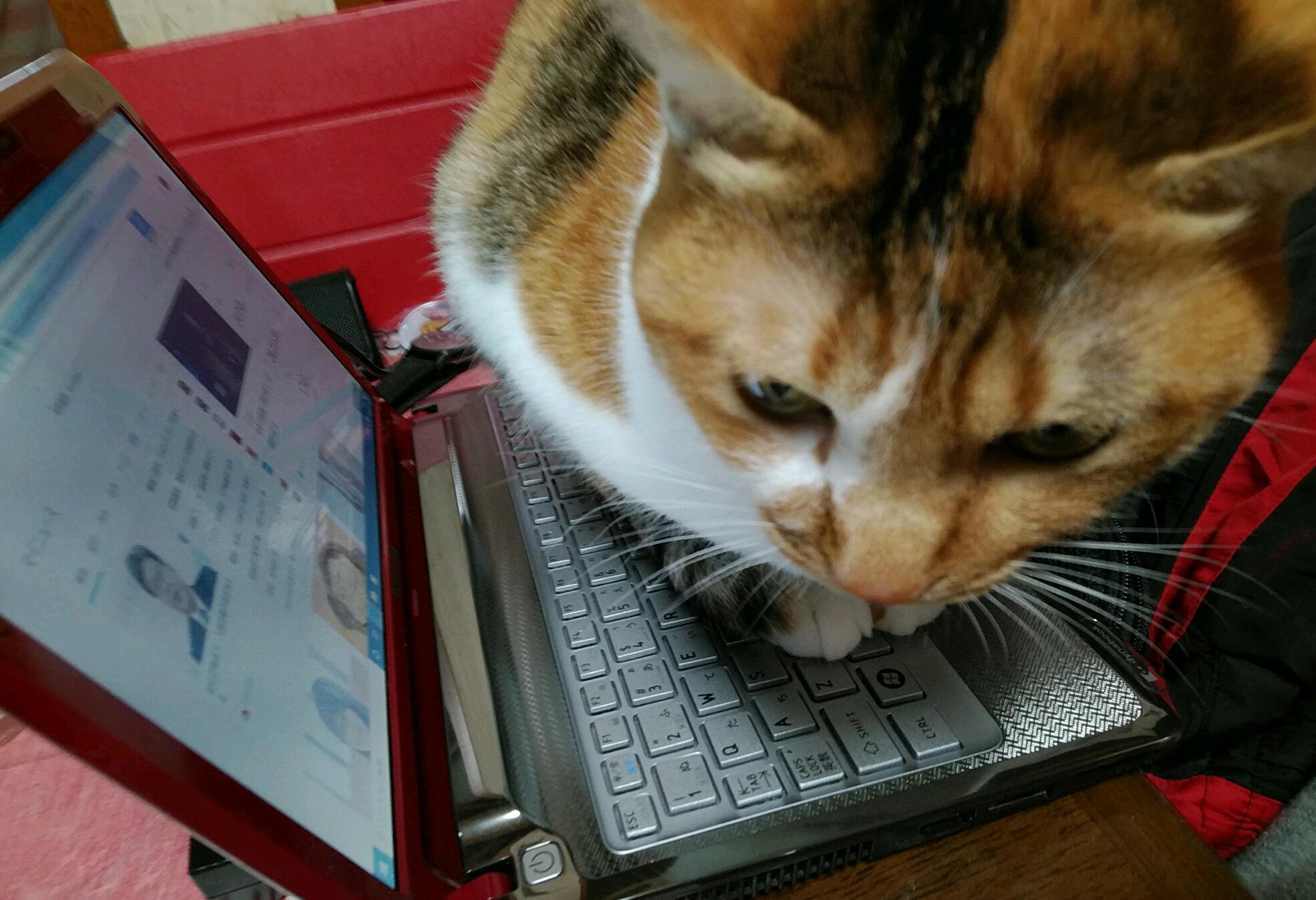 猫あるある_c0039376_15395937.jpg