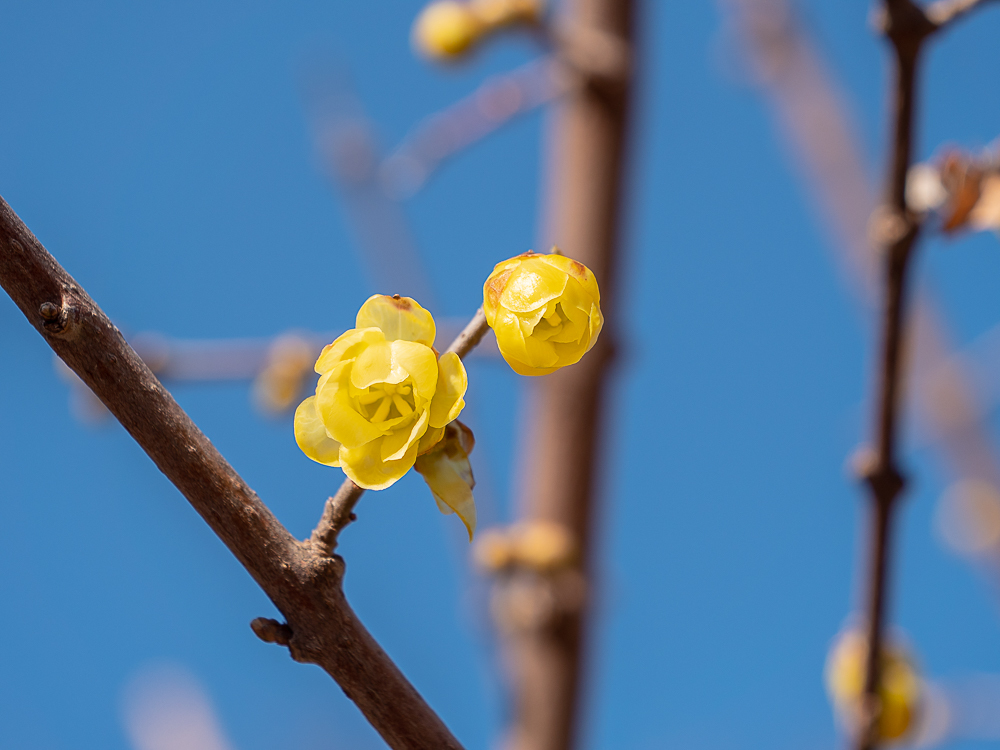 春を感じるとき_b0297977_21154202.jpg