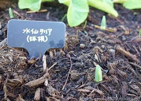 冬の庭で見つけた「小さな春」_c0293787_10401067.jpg
