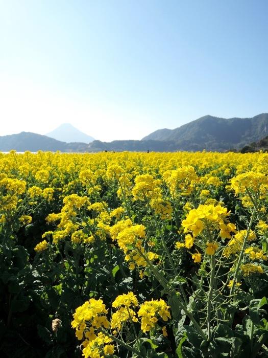ほうれん草と菜の花のムース_f0232994_13280422.jpg