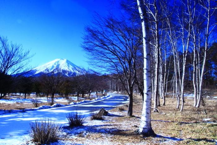 令和2年1月の富士 (8) 富士山麓の白樺の富士_e0344396_22193125.jpg