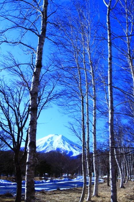 令和2年1月の富士 (8) 富士山麓の白樺の富士_e0344396_22194202.jpg