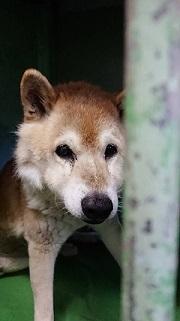 【犬猫・移動先募集】センター(支所)収容(1/14訪問)_f0242002_18262493.jpg