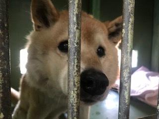 【犬猫・移動先募集】センター(支所)収容(1/14訪問)_f0242002_18265064.jpg