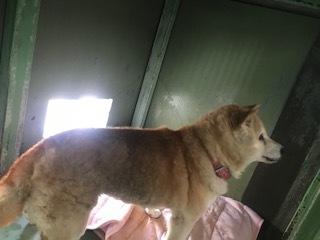 【犬猫・移動先募集】センター(支所)収容(1/14訪問)_f0242002_18270599.jpg