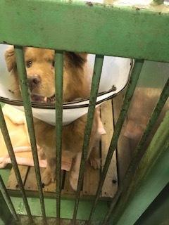 【犬猫・移動先募集】センター(支所)収容(1/14訪問)_f0242002_18273802.jpg