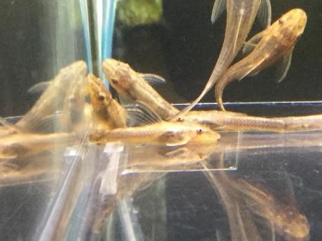 200116 熱帯魚 めだか 水草_f0189122_12234453.jpeg