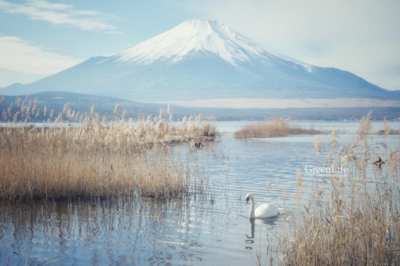 富士を求めて_f0321522_23285662.jpg