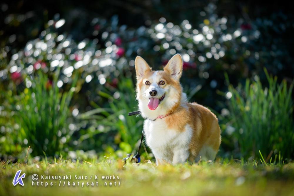 キラキラ渚のモモちゃん_d0102523_14200802.jpg