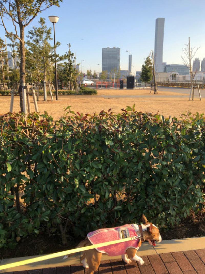 豊洲ぐるり公園お散歩_b0310424_13111504.jpg