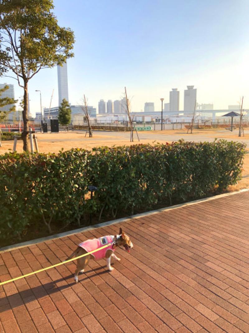 豊洲ぐるり公園お散歩_b0310424_13112254.jpg
