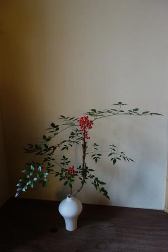 庭の冬の花_a0197730_22532415.jpeg