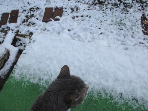 雪が降った     1月 15日(水)_d0127634_08001848.jpg
