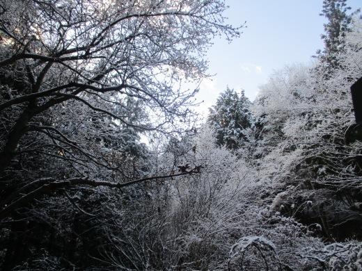 雪が降った     1月 15日(水)_d0127634_08060908.jpg