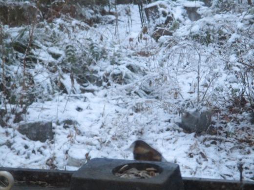 雪が降った     1月 15日(水)_d0127634_08192061.jpg