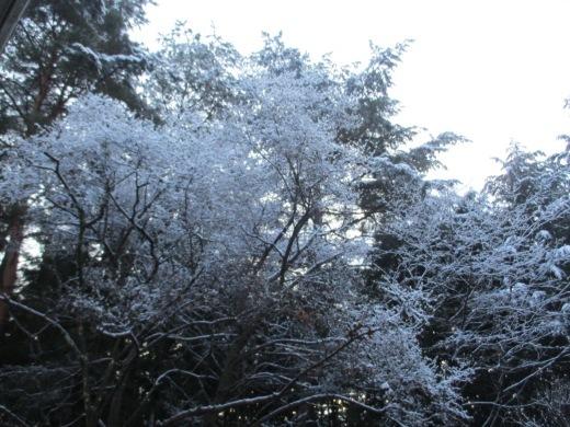 雪が降った     1月 15日(水)_d0127634_08225846.jpg