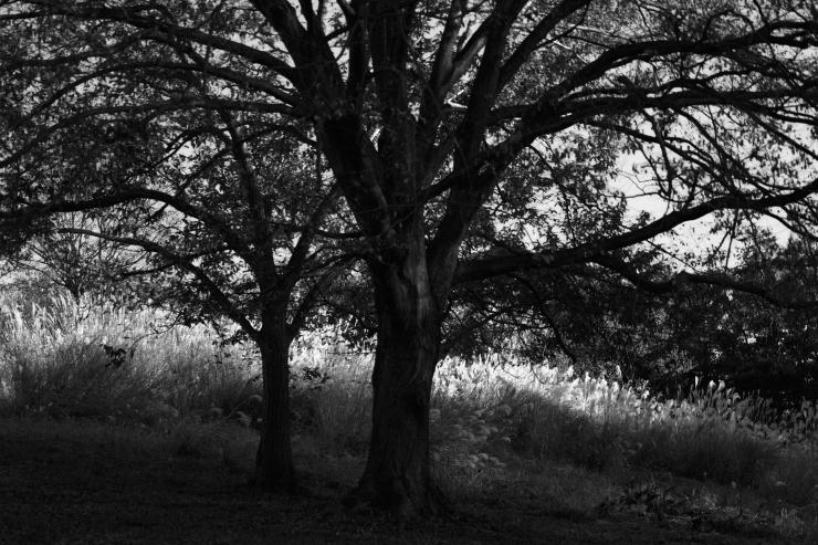 夕方の散歩(4cut)_e0342136_18513288.jpg