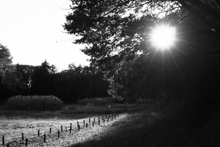 夕方の散歩(4cut)_e0342136_18513627.jpg