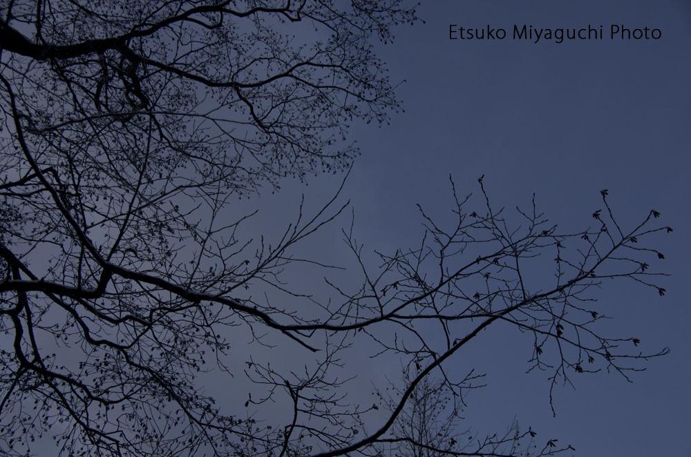 冬空_f0152939_06264467.jpg