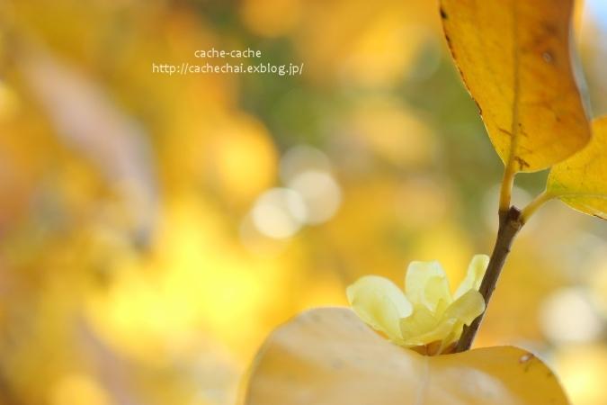 初春の_b0366862_22434964.jpg
