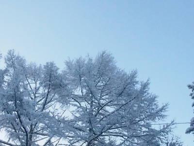 雪かき道具で_a0129867_09422056.jpg