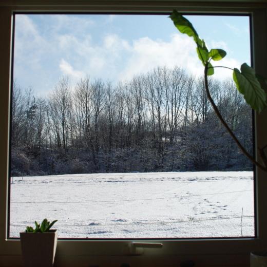 ライ麦10%のカンパーニュと、久しぶりの積雪_c0110869_13095550.jpg