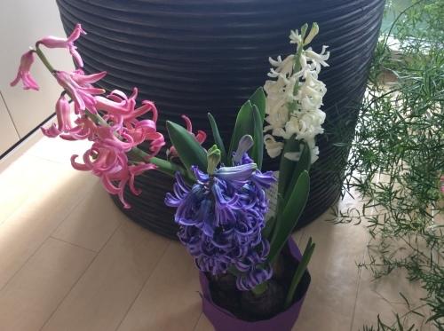 お花💐のエネルギー✨_b0301070_23144205.jpeg