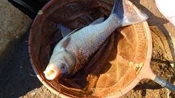 今日もイメージを釣りに 041 同じことを繰り返して新年なのか_c0121570_13260666.jpg