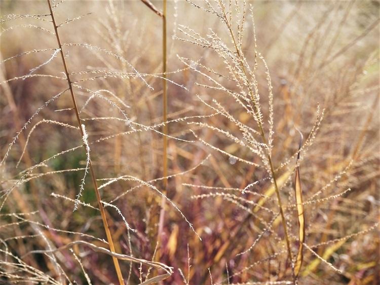 冬色のパレット_a0147281_13372404.jpg