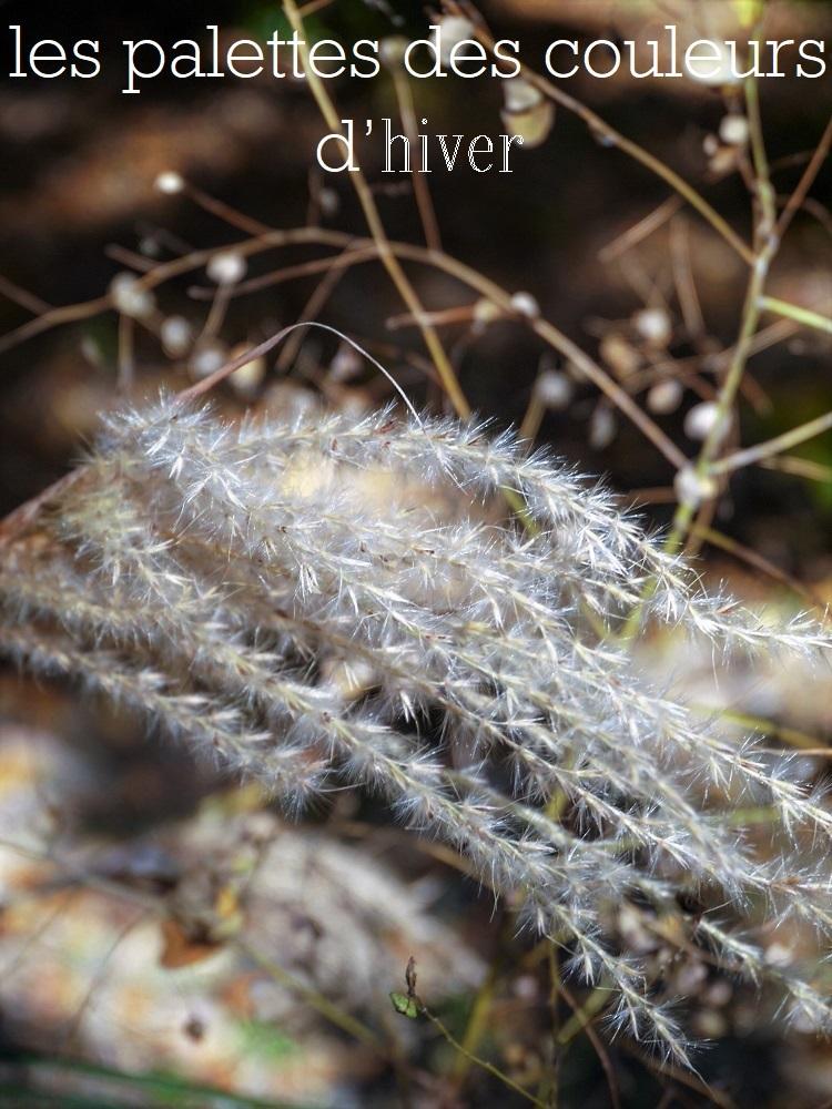 冬色のパレット_a0147281_13373890.jpg