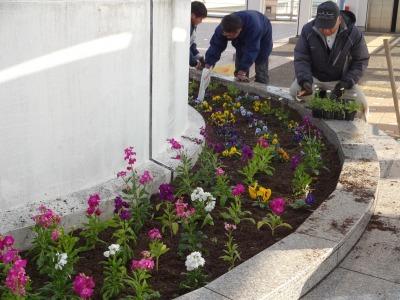 名古屋港水族館前花壇の植栽R2.1.15_d0338682_16180626.jpg