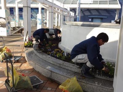 名古屋港水族館前花壇の植栽R2.1.15_d0338682_16225833.jpg