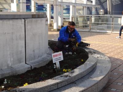 名古屋港水族館前花壇の植栽R2.1.15_d0338682_16231705.jpg