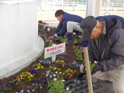 名古屋港水族館前花壇の植栽R2.1.15_d0338682_16233504.jpg