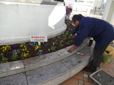 名古屋港水族館前花壇の植栽R2.1.15_d0338682_16234847.jpg