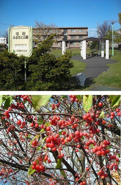 北屯田の公園と遊歩道を歩く(2)_f0078286_07341871.jpg