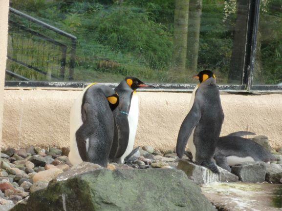 エディンバラ動物園(Edinburgh Zoo)_c0076387_06014562.jpg
