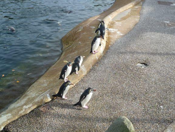 エディンバラ動物園(Edinburgh Zoo)_c0076387_06025785.jpg
