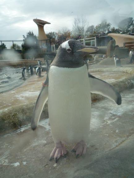 エディンバラ動物園(Edinburgh Zoo)_c0076387_06041695.jpg