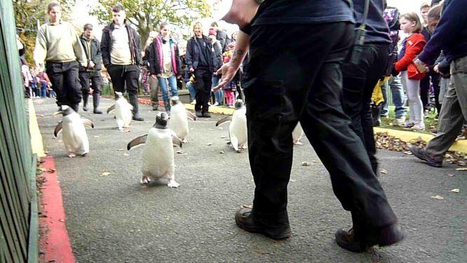 エディンバラ動物園(Edinburgh Zoo)_c0076387_06044582.jpg