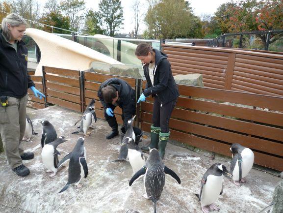 エディンバラ動物園(Edinburgh Zoo)_c0076387_06050147.jpg
